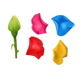 Set rose petals bright different colors