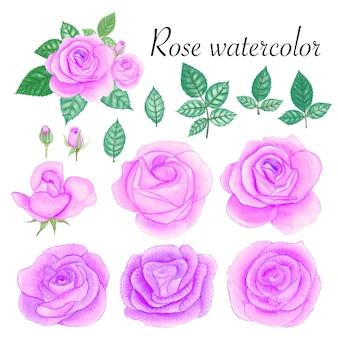 Set of rose watercolor elements.