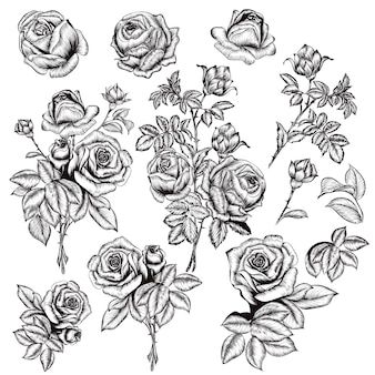 Set of roses sketches with leaves