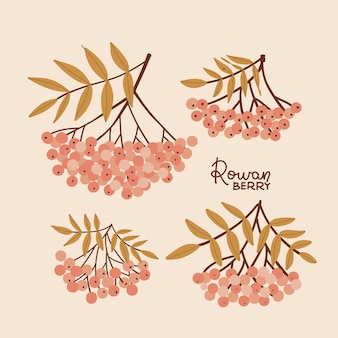Set of rowan branches with red berries and yellow leaves hand drawn vector isolated illustration in ...