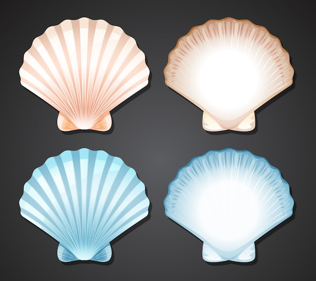 Set of scallop seashell