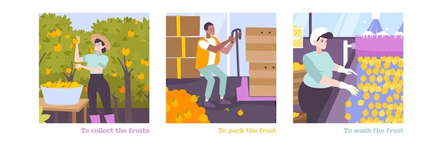 Set of scenes of people who collect pack and wash fruits