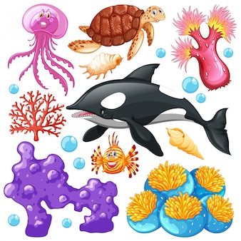 Set of sea creatures on white background