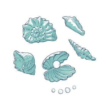 貝殻と真珠をさまざまな形に設定します。海洋をテーマにした観光カードのロゴのクラムシェルモノクロアウトラインスケッチイラスト。