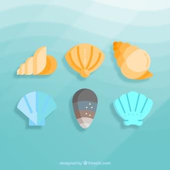 Set of sea shells