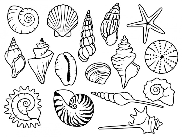 Set of seashells. сollection of silhouette seashells with pearls. vector illustration