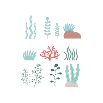 Set of seaweed and coral on a white background. clipart algae and marine plants, set of icons. cartoon vector illustration.
