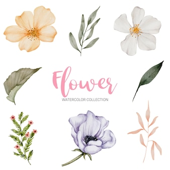 Set of separate parts and bring together to beautiful bouquet of flowers in watercolor style