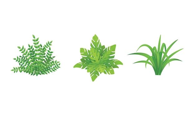 Set of shrubs and bushes, garden plants, vector illustration