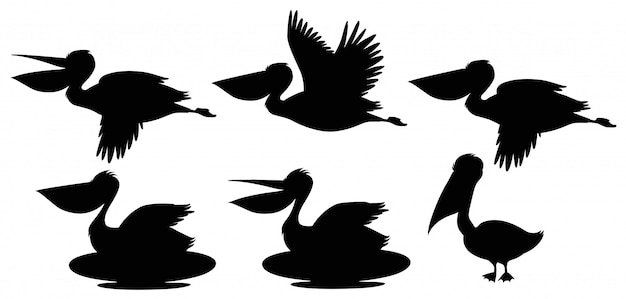 Set of silhouette pelican