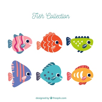 Set of six colorful fish