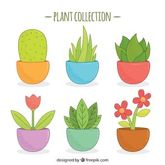 Set of six hand-drawn pots
