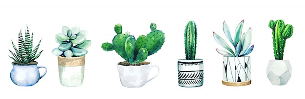 Set of six potted cactus plants and succulents, hand drawn