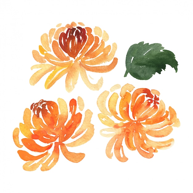 Set of sketch watercolor chrysanthemum flowers