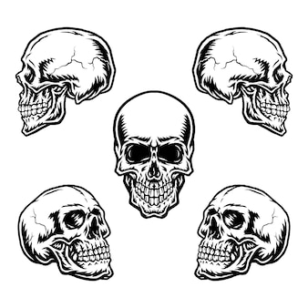 Set of skulls in different positions