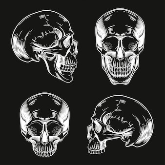 A set of skulls in the style of engraving