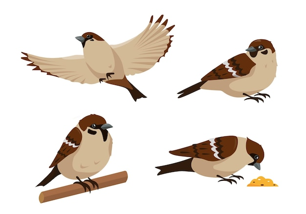 Set of sparrows in different poses isolated. collection of sparrow birds