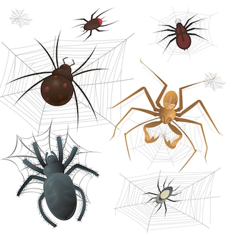 Set of spiderweb with spiders