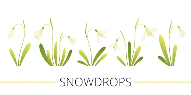 Set of spring flowers. white snowdrops with leaves. cartoon flat vector illustration. isolated on a white background.