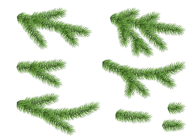 Set of spruce branch isolated on white background. green fir. realistic christmas tree. vector illustration for xmas cards.