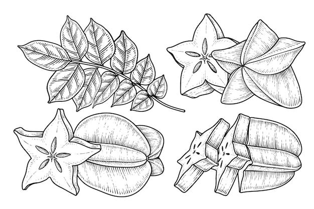 Set of star fruit or carambola fruit hand drawn elements botanical illustration