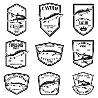 Set of sturgeon caviar labels