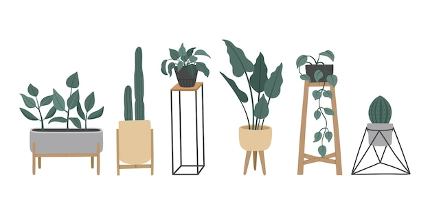Set of stylish vintage house plants