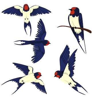 Set of swallows isolated on a white background.