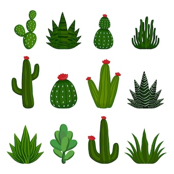 Set of thorny cactuses and succulents