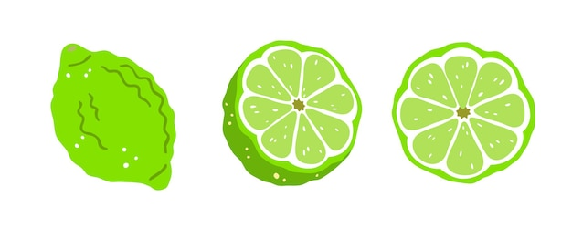 Set of three limes on a white background. vector illustration