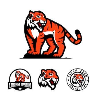 Set of tiger mascot logo for sport team mascot logo.