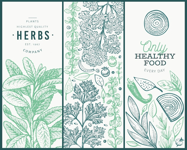 Set of tree culinary herbs banner templates.