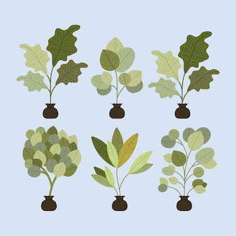 Set trees plants cultivated in sacks