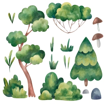 Set of trees, spruce, pine green, grass, stones watercolor illustration on a white background