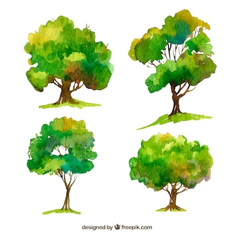 Set of trees in watercolor style