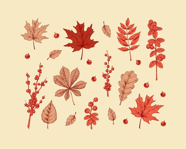 Set of trendy autumn leaves and berries