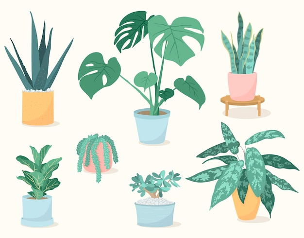 Set of trendy house plants in pots, aloe vera, fiddle leaf fig, snake plant, monstera, burros tail, aglaonema, jade plant. succulents and leafy plants.