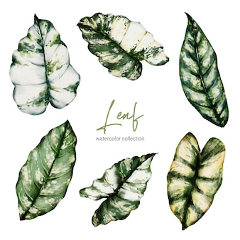 Set di monstera e caladium eleganti tropicali in stile acquerello