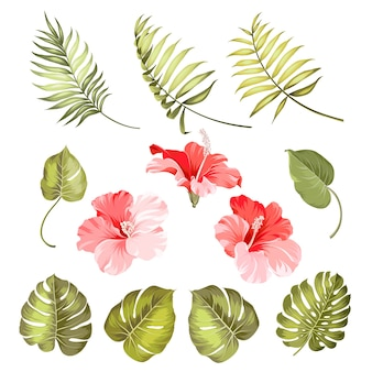 Set of tropical elements hibiscus flower.