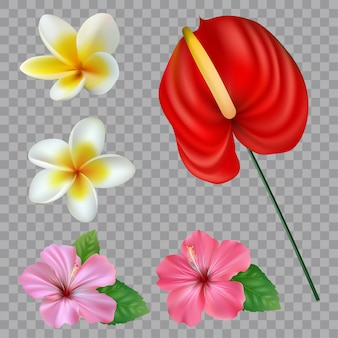 Set of tropical flowers collection. vector isolated elements on the white background