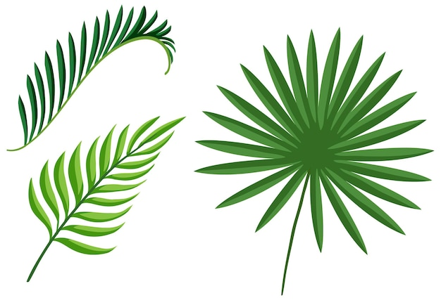 Set of tropical green plant leaves
