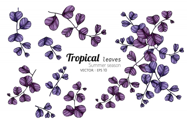 Set of tropical leaf drawing illustration with line art on white backgrounds.