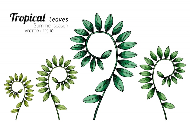 Set of tropical leaf drawing illustration with line art on white