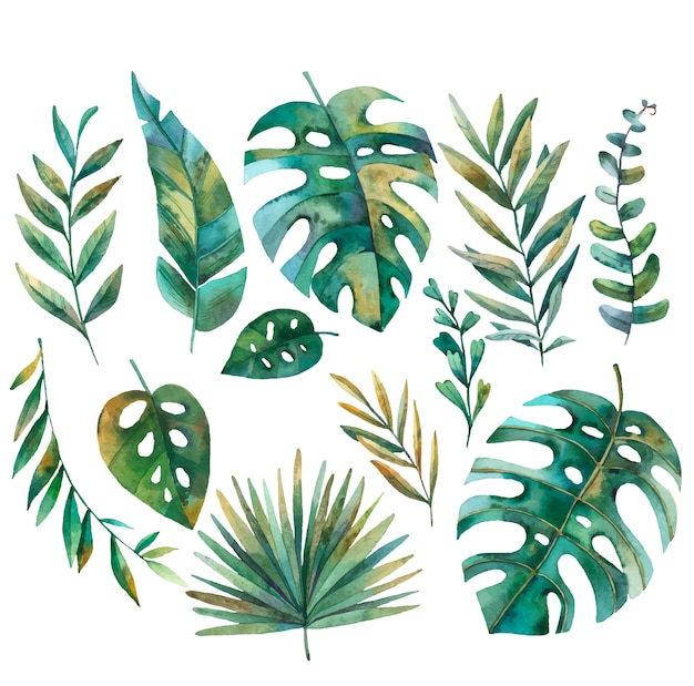 Set of tropical leaves, monstera, palm in vector, watercolor illustration on white background