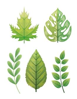 Insieme di foglie tropicali