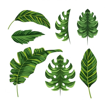 Set tropical palm exotic leaves