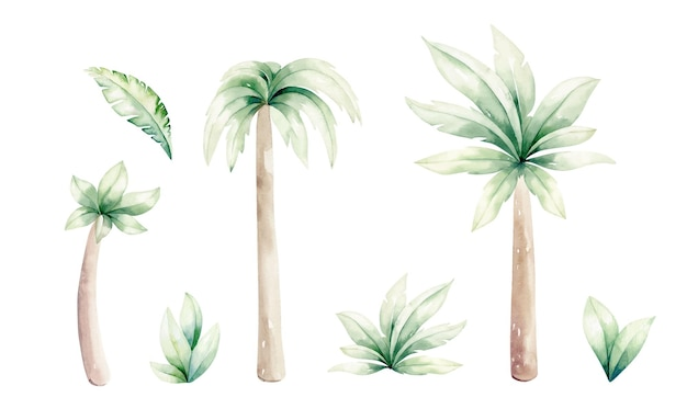A set of tropical palm trees, leaf collection. vector watercolor realistic illustration.