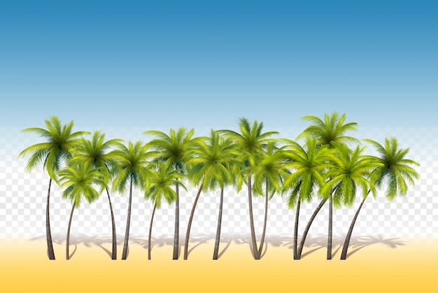Set of tropical palms