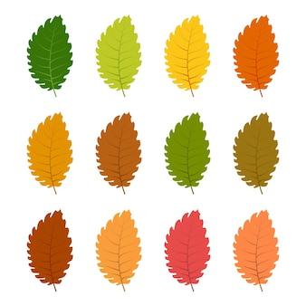 Set of twelve autumn leaves in different autumn colors. vector illustration.