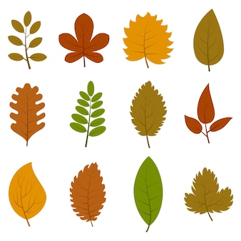 Set of twelve different autumn leaves isolated on white background. vector illustration.